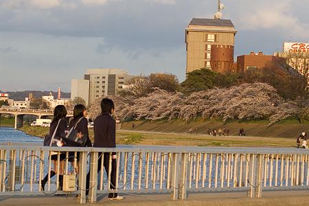 岡崎城桜1-6