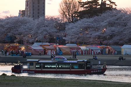 岡崎城桜1-8