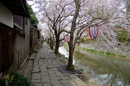 八幡堀と桜