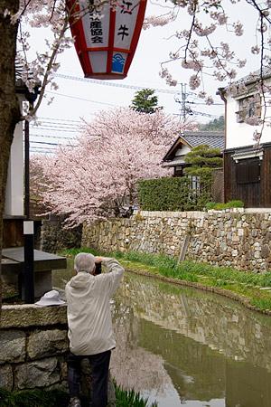 八幡堀で桜を撮るひと