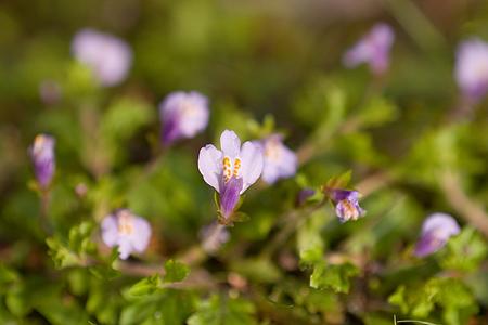 森林公園花アップ-13