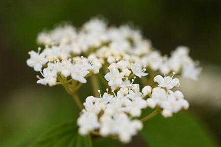 森林公園の花2-1