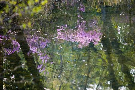 森林公園の花2-12