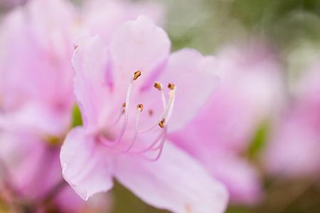 森林公園の花2-2