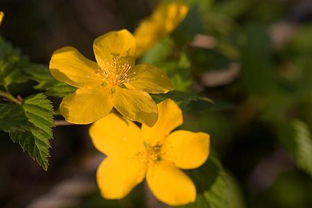 森林公園の花2-4
