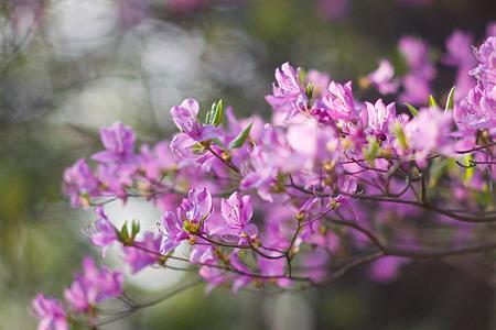 森林公園の花2-8