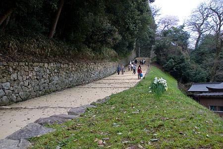 彦根城桜-12