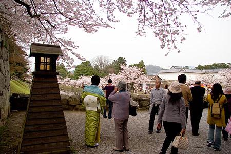 彦根城桜-6