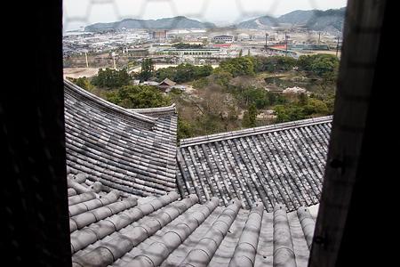 彦根城桜-7