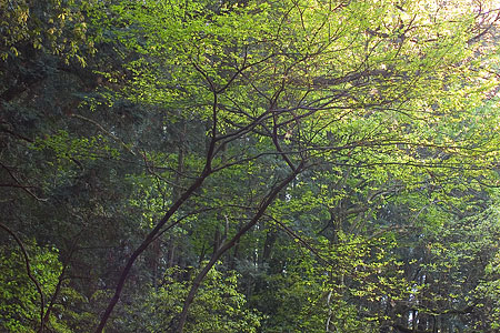 海上の森4月2-1
