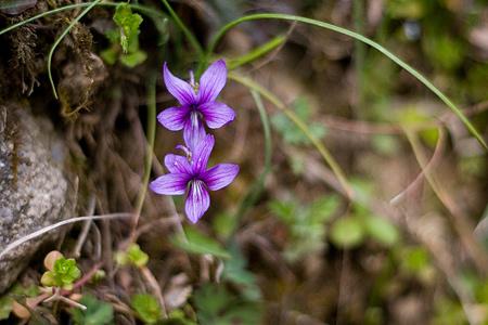 足助の花-4