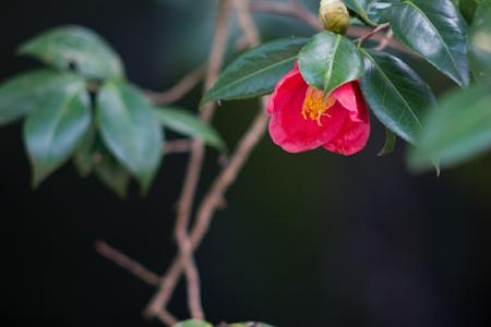足助の花-7