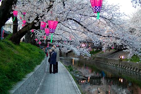 五条川桜2-10
