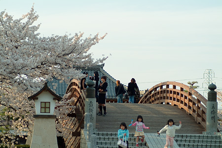 五条川桜2-2