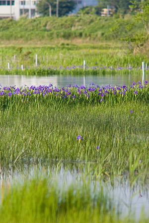 小堤西池風景-3