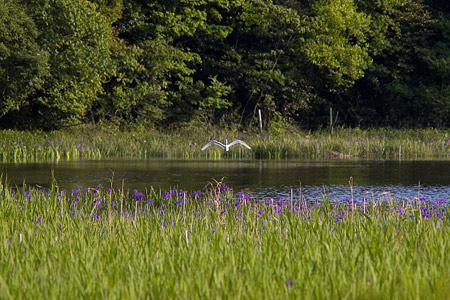 小堤西池風景-5