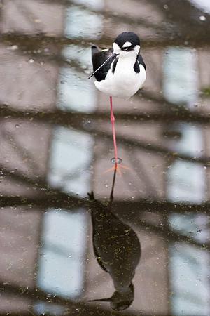 ふれあいの鳥たち-5