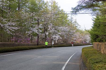 富士桜-2