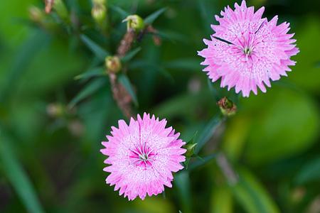グリーンピア花-11