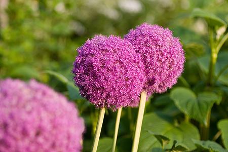 グリーンピア花-12
