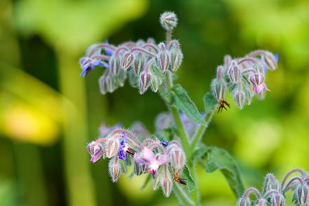 グリーンピア花-13