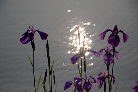 グリーンピア花-2