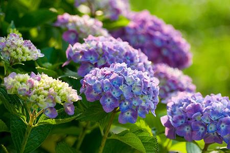 グリーンピア花-3
