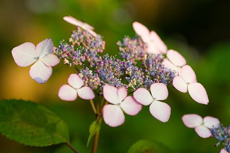 グリーンピア花-4