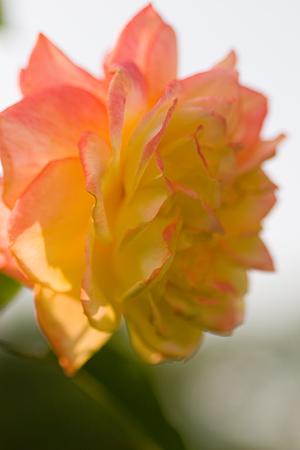 グリーンピア花-5
