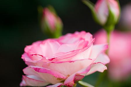 グリーンピア花-6