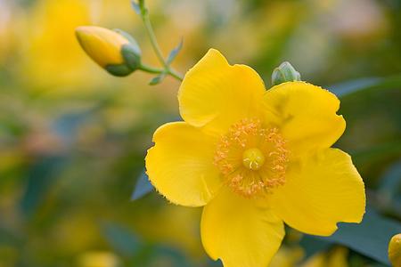 グリーンピア花-7