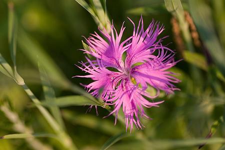 グリーンピア花-9