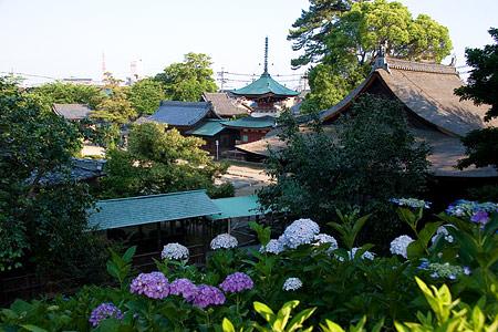 性海寺アジサイ風景