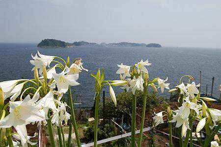 インドハマユウと篠島