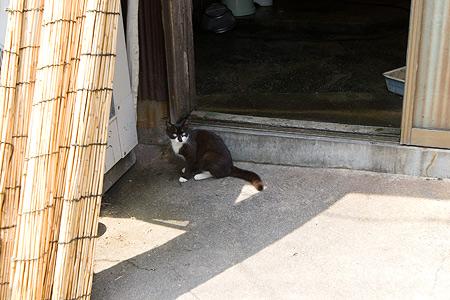 島の白黒猫