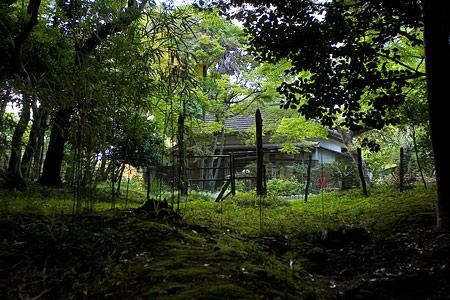 雑木林の中の民家
