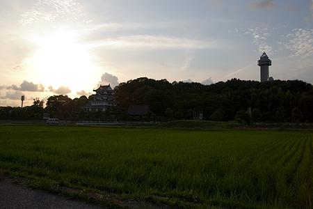 尾張旭田んぼ-11