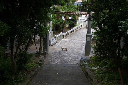 篠島2-11