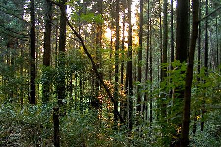 海上の森2005番地を目指す途中