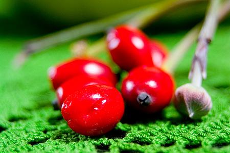 正体不明の赤い木の実
