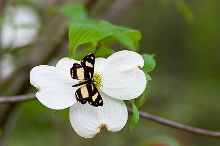 蝶と蛾の小さくて大きな差