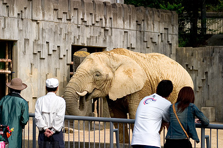 アフリカゾウの前で