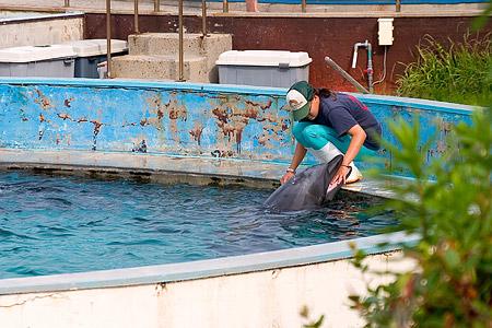 イルカとトレーナーさんの触れ合い