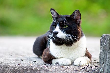 どら猫の王道