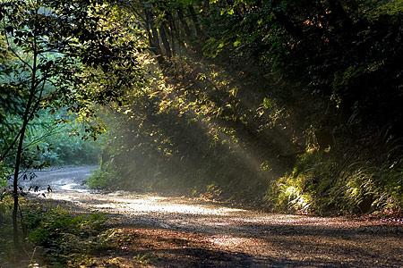 光が戻った海上の森