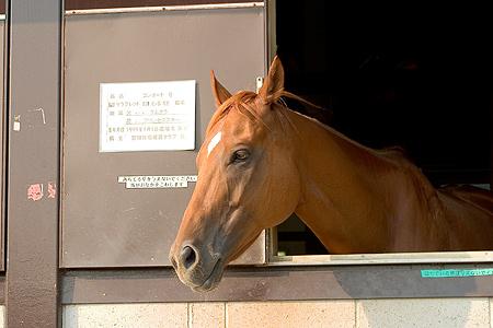 アイボクのお馬さん