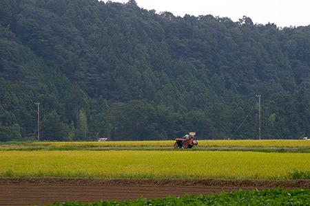 収穫の秋早くも始まる