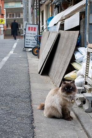 雑司ヶ谷の猫