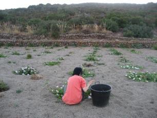 080821収穫私(小)
