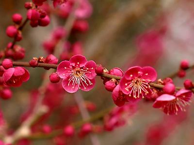 声でたのしむ美しい日本の詩 岩波文庫別冊 ...